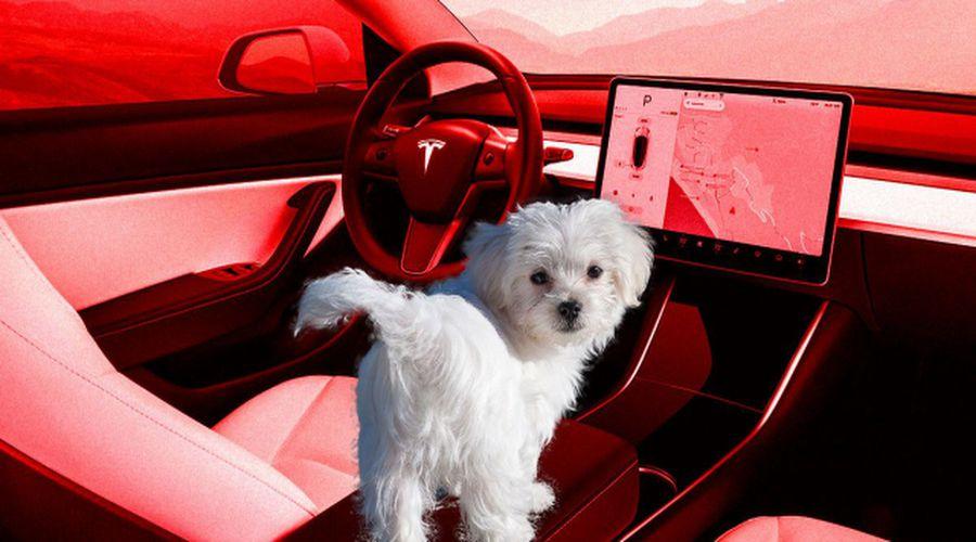 Photo of Tesla Dog Mode özelliği Musk'tan güvence