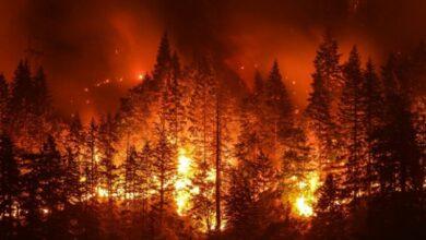 Photo of Orman yangınları ve sonraki adımını tahmin eden yazılımlar