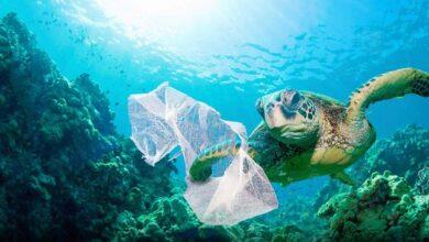 Photo of SeaClear, Otonom Robotlarla Deniz Çöplerinin Tanımlanması ve Toplanması